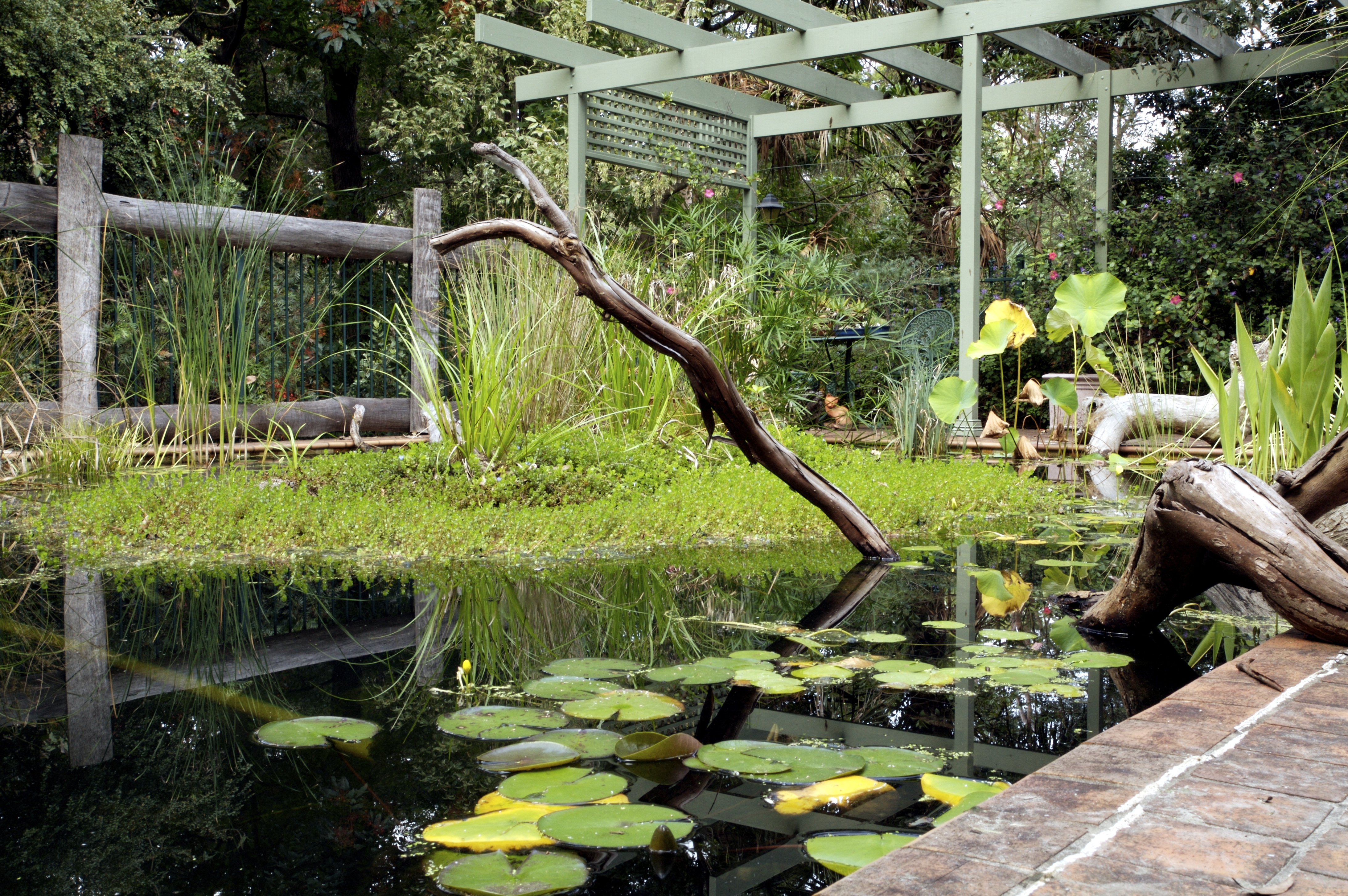 Pool to Pond – converting backyard swimming pools to ponds for ...
