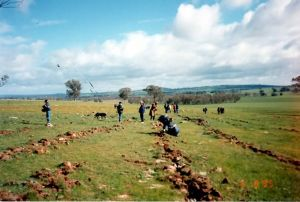 Fig 1. School student volunteers planting in block AA on 'Warrangee' in 1995.