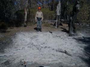 A created ashbed following the prescribed burn