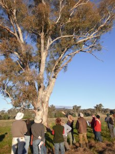 Paddock tree health field day, Holbrook, 2011.