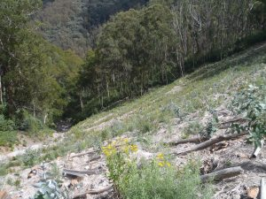 Main slope at Bourkes Gorge #2 spoil dump