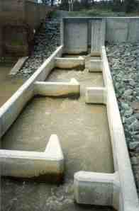 A typical vertical slot fishway design, with baffles (the walls interrupting water flow) and slots (the spaces in each baffle allowing water to flow downstream) clearly visible (Photo courtesy of Ivor Stuart)