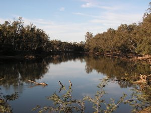 Murray River near Ladgroves Beach.  (Photo courtesy Alison King)