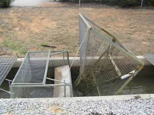 Carp cage installed at Turrumbarry. (Photo by Ivor Stuart)