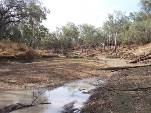 Figure 2: Drought refuge on the Condamine River (Photo courtesy of Michael Hutchison)