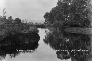 Figure 3, The Murray River near Corryong c1910. Changes are already evident including a bank covered in Scotch Thistles (Photo courtesy of Bob Whitehead)