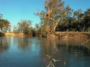 Anabranch systems such as Chowilla in South Australia provide vital year-round habitat for species including Murray Cod. (Photo Jason Highman)