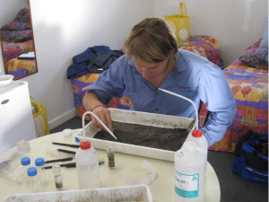 Figure 2: Researcher Sarah St Pierre live picking macroinvertebrates (Photo courtesy of Nissa Murphy)