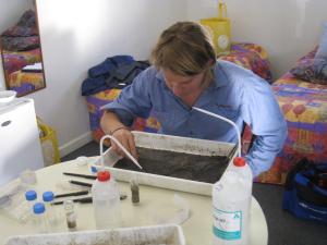 Figure 2: Researcher Sarah St Pierre live picking macroinvertebrates (Photo courtesy of Nissa Murphy)