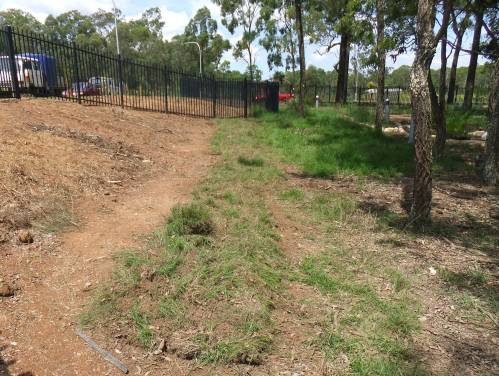 Figure 4. Native grasses being transplanted, very close together like turf sods at Kellyville. (Photo: Ecohort)