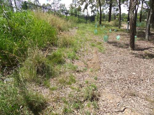 Figure 5. Same Kellyvillle site about a year later. (Photo: Ecohort)