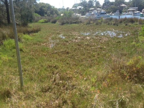 Figure 1. Reconstructed saltmarsh at Kooroowall Reserve, 2015