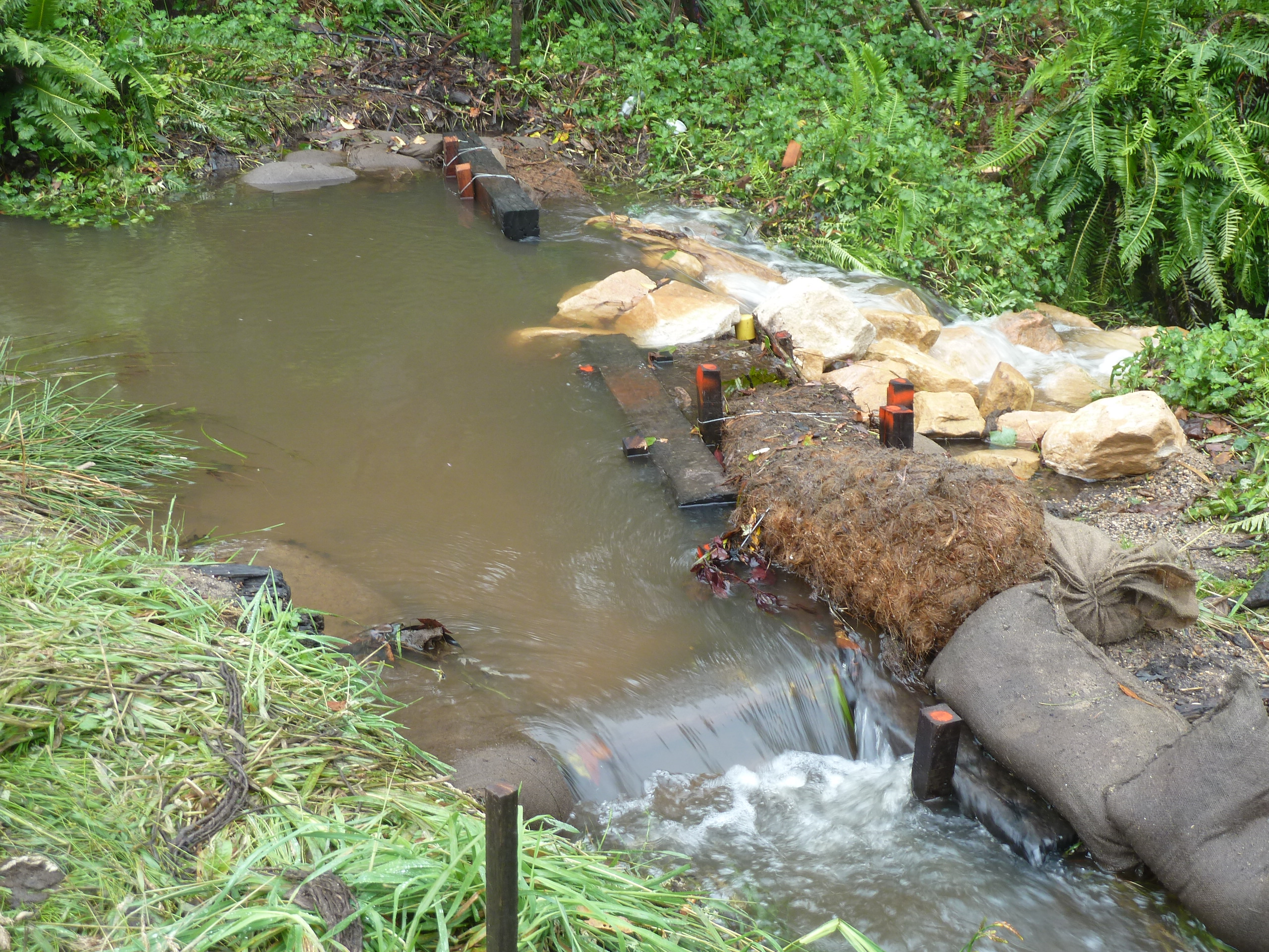 Twelve years of healing rehabilitating a willow infested for Types of pond design