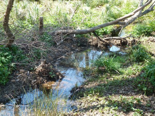 Figure 5: A natural pondage formed when debris was allowed to remain in the stream.