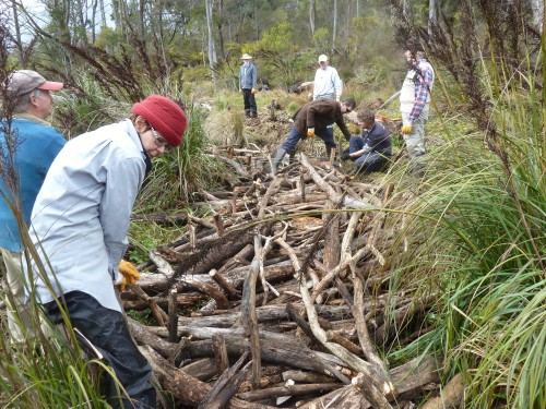 Figure 7: Volunteers using woody debris to protect the silt flat from scouring.