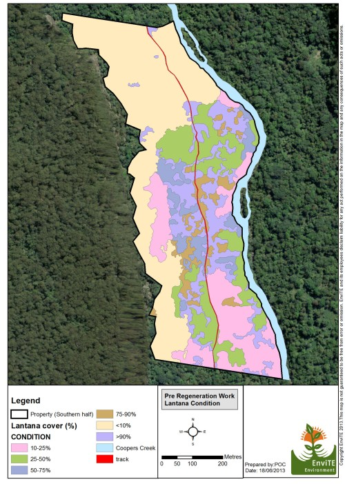 Figure 1. (map) Lantana cover prior to restoration. By 2014 very little lantana remained with regenerating rainforest taking the place of weeds.