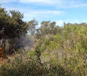 Fig 2. High biomass vegetation before burn, North Head