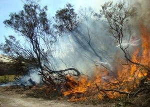 Fig 3. During burn at North Head