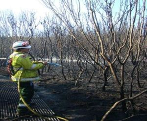 Fig 5. Mopping up after burn at North Head