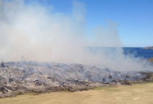 Fig 8. Mopping up after burn, La Perouse