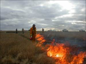 Fig 1. Snake Gully CFA burn at Chepstowe.