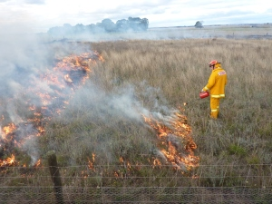 Fig 6. Buckley Swamp CFA conducting a late autumn burn of restored herb-rich grassland near Hamilton.