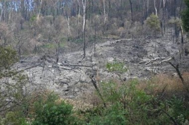 Fig 7. Swamp burnt in drier conditions during autumn.