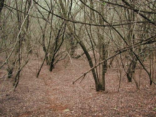 Beneath dense olive canopy