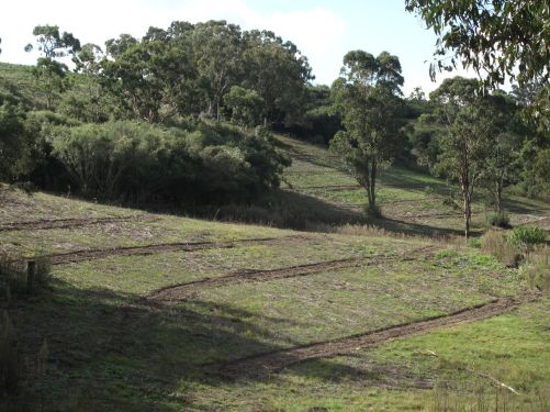 Direct seeding strips