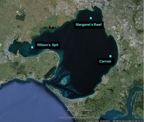 Figure 3. Port Phillip Bay Shellfish Reef Restoration sites.