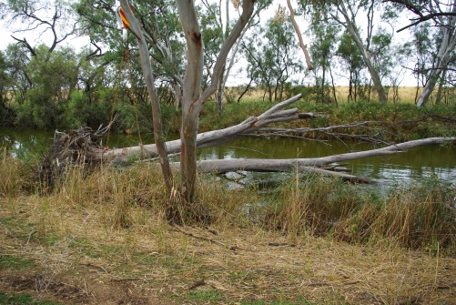 Image 3 - Adding structural timber to Oakey Creek