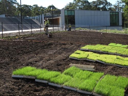 Planting Seed prod area