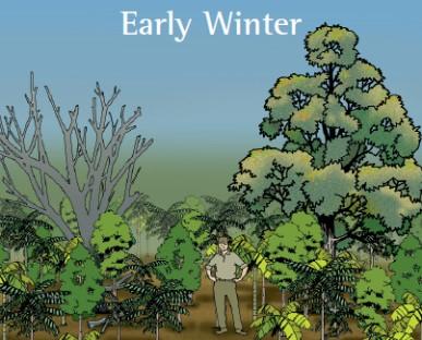 Figure 5. Enjoy the growing rainforest.