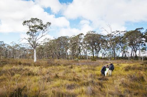 Fig 2. Broad Swamp, Newnes Plateau (Maurizio Rossetto)