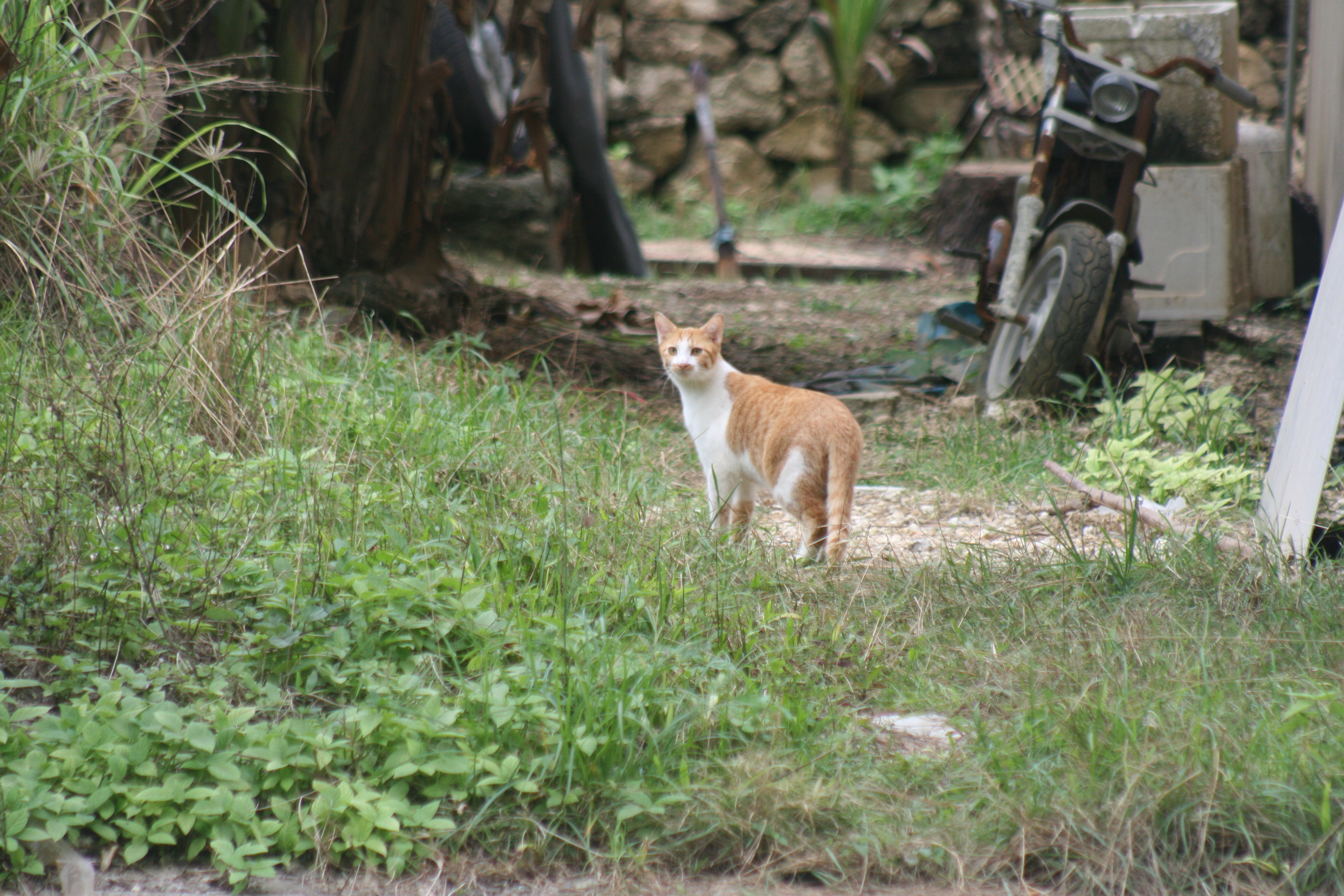 Christmas Island Eradication 2020 Registration of domestic cats on Christmas Island, Indian Ocean